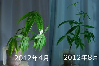 2012年4月時点と8月時点との比較